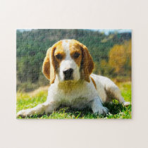 Beagle Hound Dogs. Jigsaw Puzzle