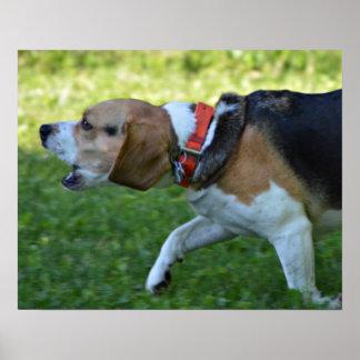 Beagle Hunting Poster