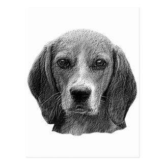 Beagle - imagen estilizada tarjeta postal