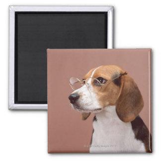 Beagle Imán Cuadrado