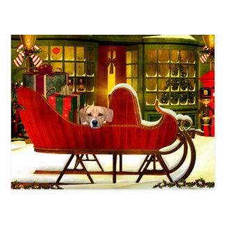 Beagle in a Christmas sleigh Postcard