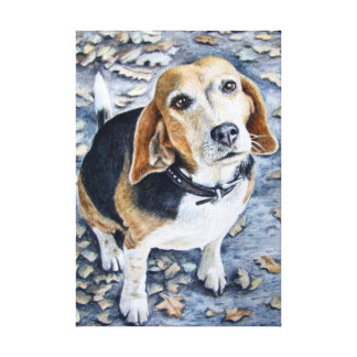 Beagle in Autumn Stretched Canvas Prints