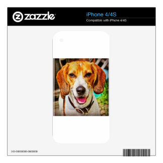 Beagle in Oil Skin For The iPhone 4S