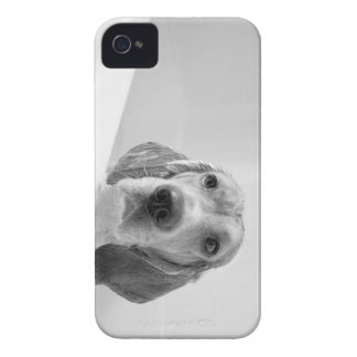 Beagle in the Bathtub iPhone 4 Case-Mate Cases