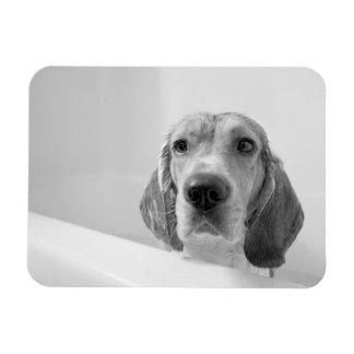 Beagle in the Bathtub Rectangular Photo Magnet