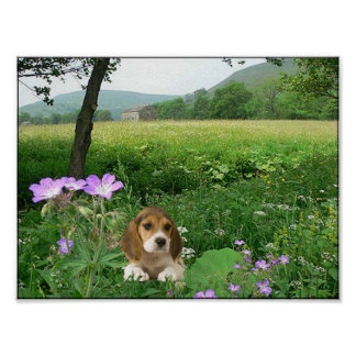 Beagle In The Meadow Poster