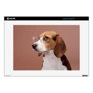 Beagle Laptop Decals