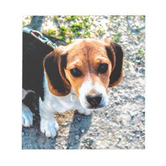 Beagle lindo blocs