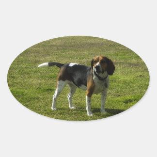 Beagle Pegatina Óval