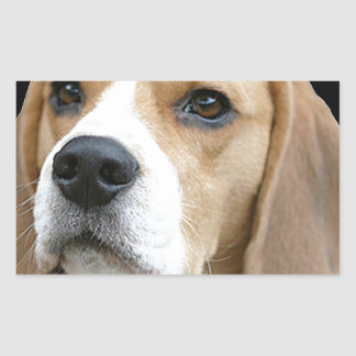 Beagle Rectangular Altavoces