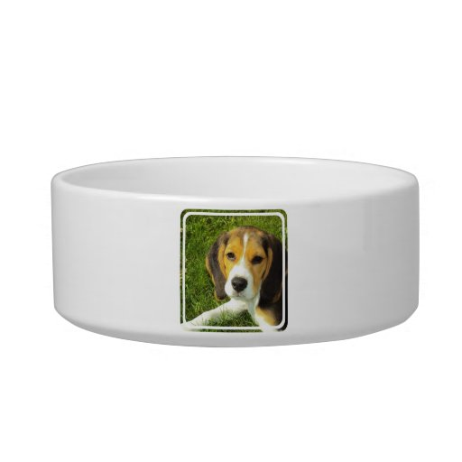 Beagle Pet Bowl Cat Bowl