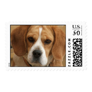Beagle Picture Postage Stamp