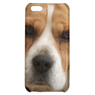 Beagle Pictures Case For iPhone 5C