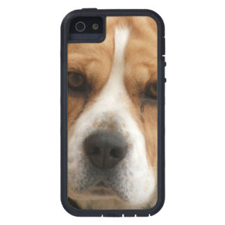 Beagle Pictures Case For iPhone SE/5/5s
