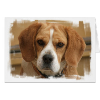 Beagle Pictures Greeting Card