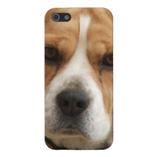Beagle Pictures iPhone 5 Cover