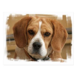 Beagle Pictures Postcard