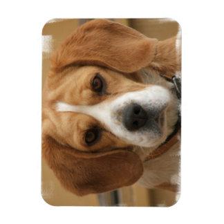 Beagle Pictures Premier Magnet Rectangular Magnets