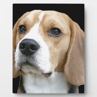 Beagle Plaque