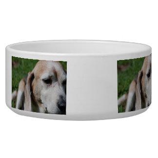 beagle portrait bowl