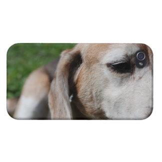 beagle portrait iPhone 4/4S cover