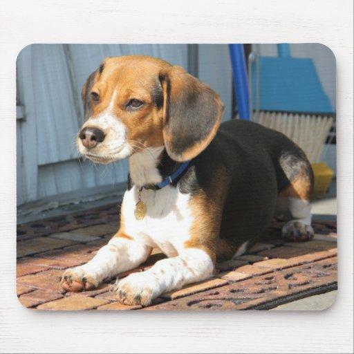 Beagle Portrait Mouse Pads