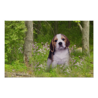 Beagle Poster In Forest