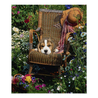 Beagle Poster In The Garden Chair