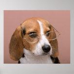 Beagle Print