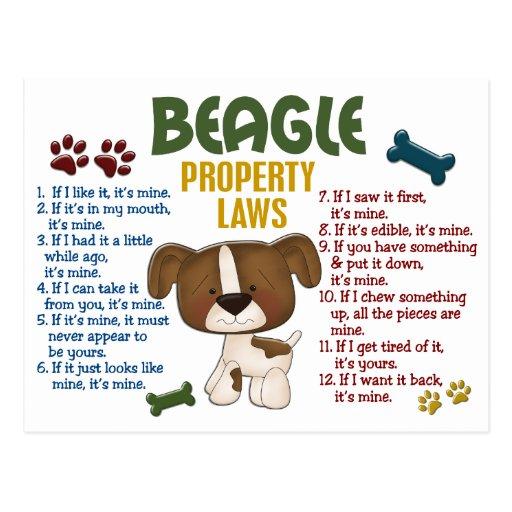 Beagle Property Laws 4 Postcard