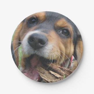 Beagle Pup Chewing On Old Tree Limb Paper Plate