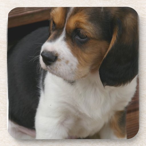 Beagle Pup  Cork Coasters