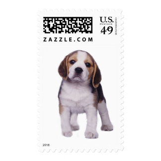Beagle Pup Postage Stamp