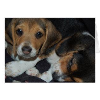 Beagle Puppies Birthday Card