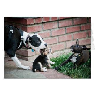 Beagle Puppies Taste Yummy Greeting Card
