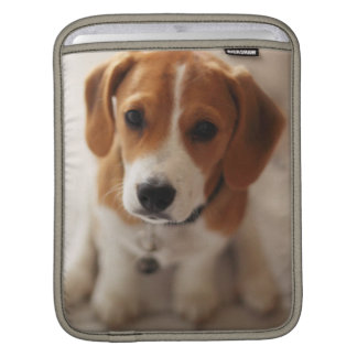 Beagle Puppy 2 Sleeve For iPads