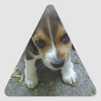 Beagle_puppy_6_weeks.png Triangle Sticker