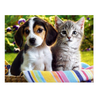 Beagle Puppy and Gray Kitten Postcard