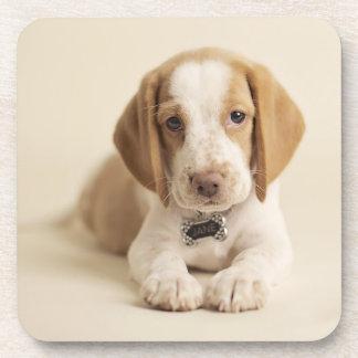 Beagle Puppy Beverage Coaster