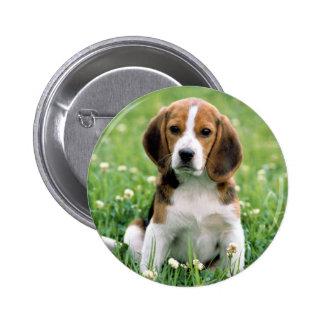 Beagle Puppy Button
