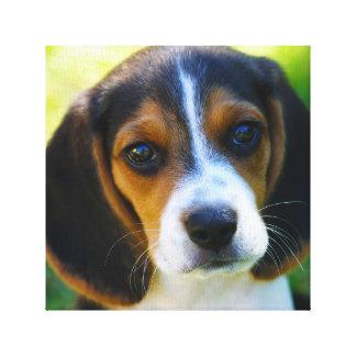 Beagle Puppy Canvas Print