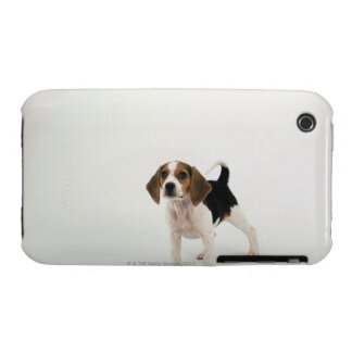 Beagle puppy iPhone 3 covers