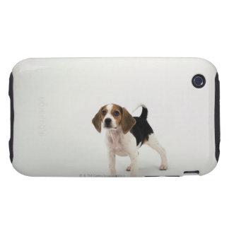 Beagle puppy iPhone 3 tough cover