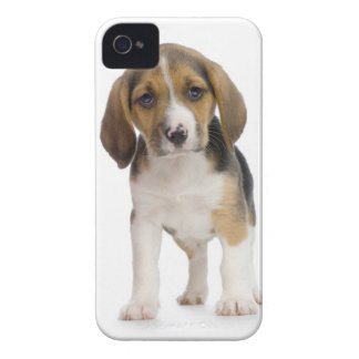 Beagle Puppy iPhone 4 Covers