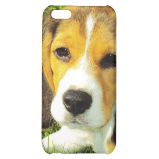 Beagle Puppy Case For iPhone 5C