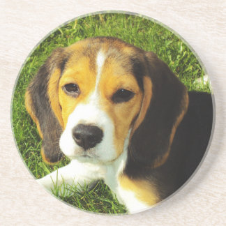 Beagle Puppy Coaster