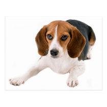 Beagle Puppy Dog Blank Hello, Thank you,  Miss You Postcard