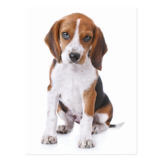 Beagle Puppy Dog Greeting Post Card