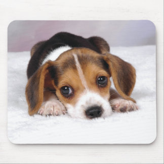 Beagle Puppy Dog Mouse Pad