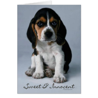 Beagle Puppy Dog Photo Card
